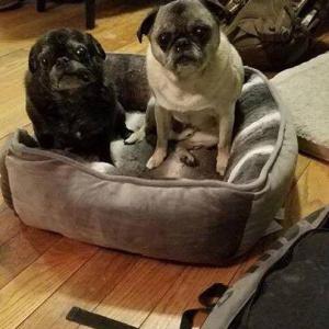 Stella & Mack